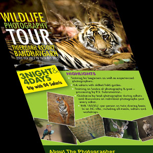 Parfait Hospitality: Emailer design for Wildlife Photography Tour